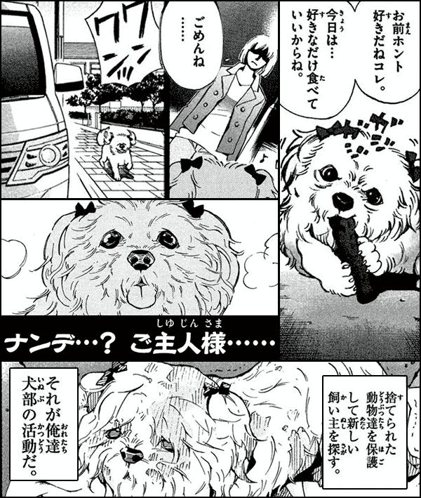 犬部!-ボクらのしっぽ戦記-